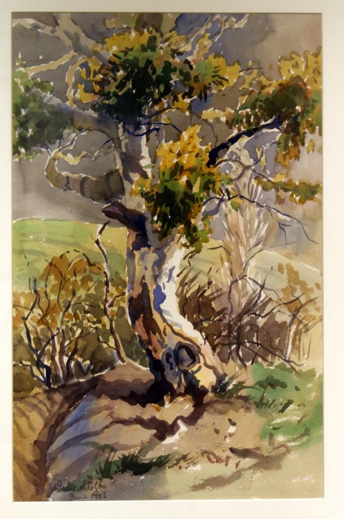Walter Wotzke Watercolour Wayside Gum